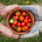 [one person giving another person a bowl of cherry tomatoes] - Photo by Elaine Casap on Unsplash